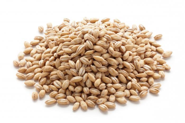 Перловка из какого зерна
