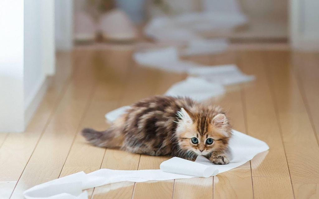Котенок играется с туалетной бумагой
