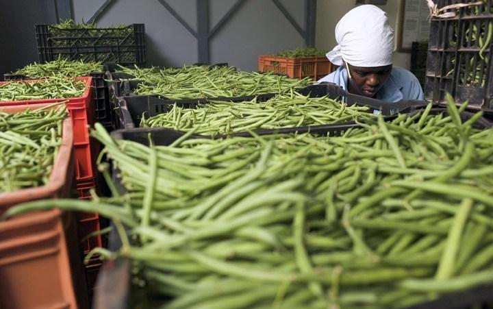 Урожай фасоли в Кении