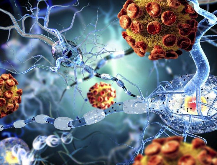Антитела, поражающие миелин