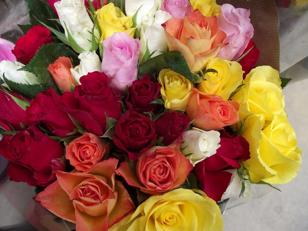 цветные розы букет