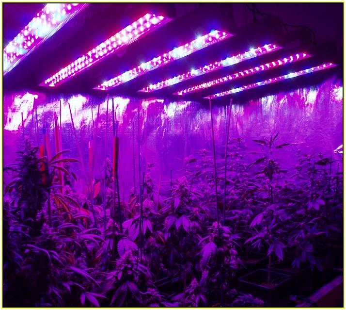 Выращивание конопли под ультрафиолетом как выращивать марихуану в природе