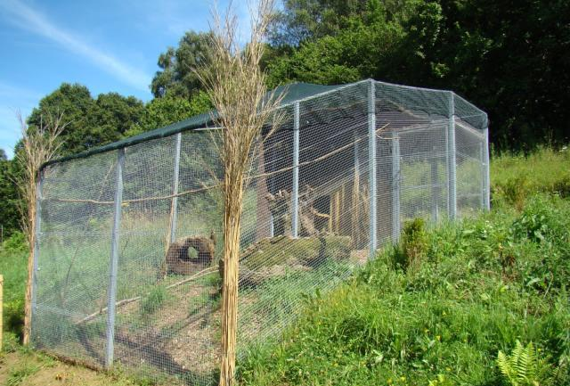 How to make an aviary for pheasants