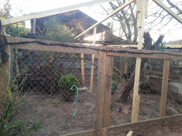 Aviary for pheasant