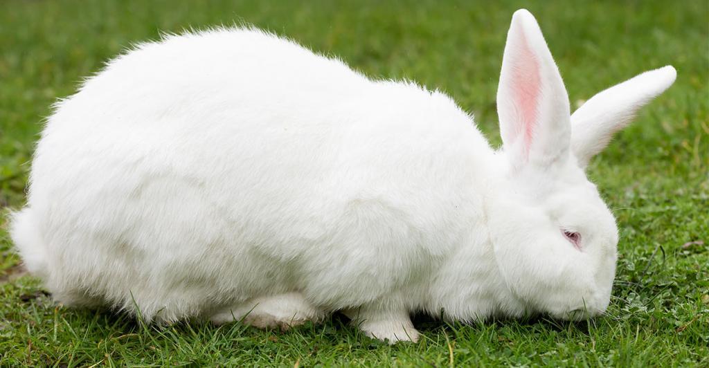 Кроль на траве