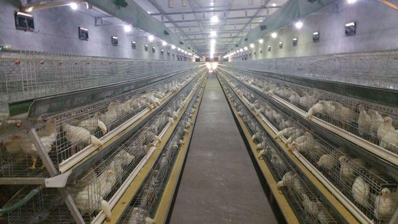 Освещение фермы