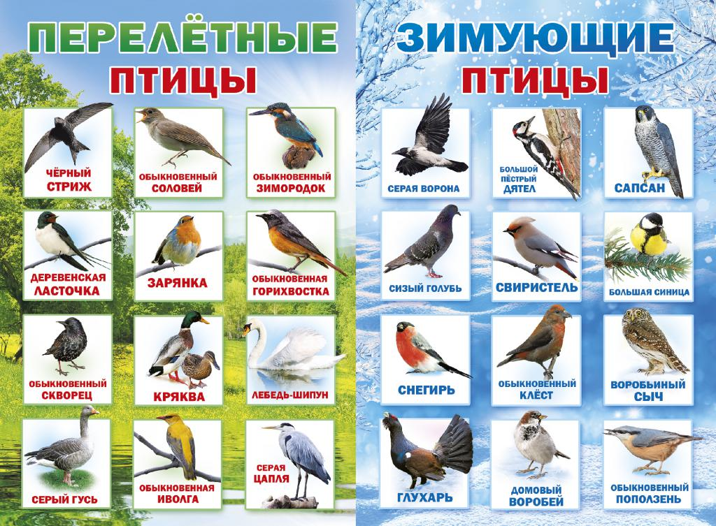 Как научить ребенка познавать мир с помощью картинок птиц
