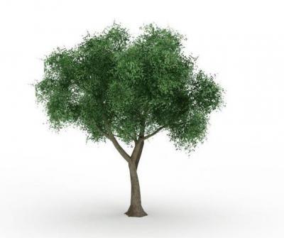 Геморрой как лечить осиновым листом