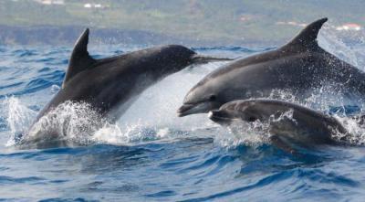 Секс самок дельфинов с людмила