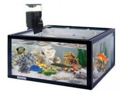 Картинки по запросу Как выбрать автокормушку в аквариум.