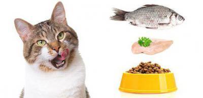 Сухой корм Optimeal / Оптимил для собак | Купить - Киев