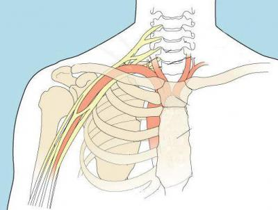 Изображение - Состав плечевого сустава 1288681
