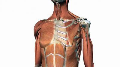 Изображение - Состав плечевого сустава 1288682
