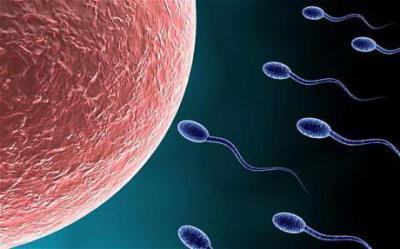 Мало подвижный сперматозоид