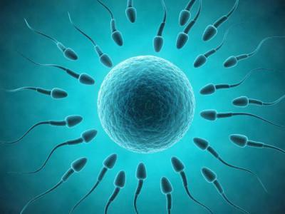 Малоподвижные сперматозойды причина