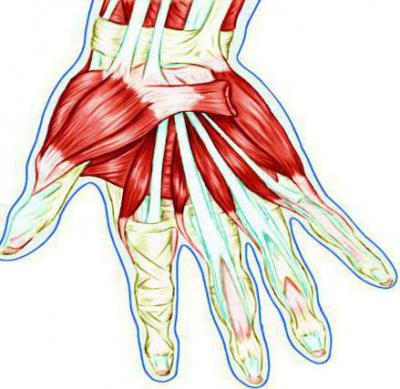 Болезни связок и сухожилий кисти
