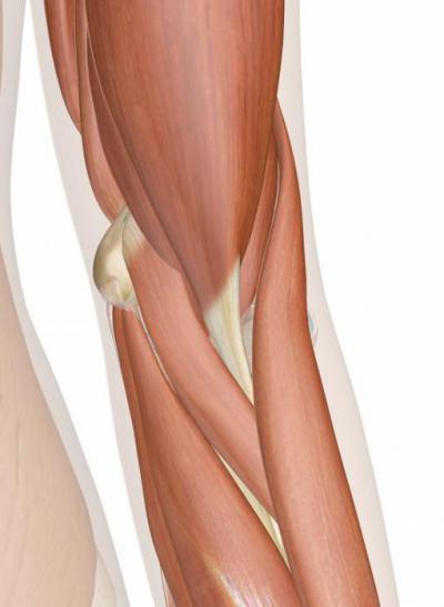 Изображение - Нервы локтевого сустава анатомия 1393372