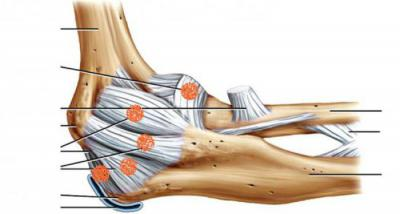 Изображение - Нервы локтевого сустава анатомия 1393916