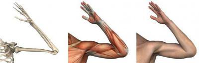 Какие движения возможны в локтевом суставе