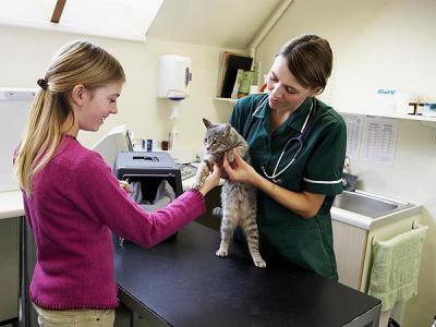 Может ли кошка заразиться от человека гепатитом в