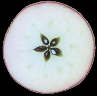 Кто делал приворот на яблоко и чем это обернулось