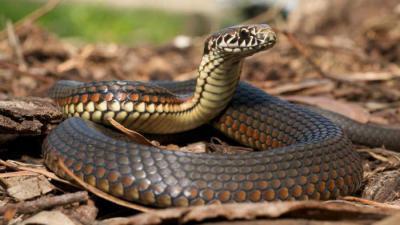 Женщина змея телец характеристика в 2019 году