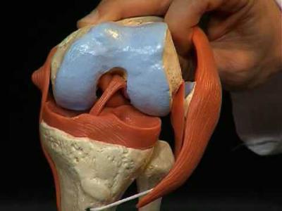 Лигаментоз коленного сустава лечение если болят плечевые суставы к какому врачу обращаться