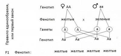 Как решить задачу по биологии по генетике решение обратных геодезических задач i