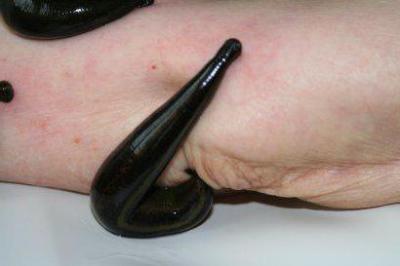 Соус из чесночных стрелок и тыквенных семечек новые фото