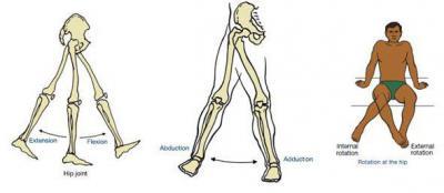 Изображение - Связки тазобедренного сустава анатомия 1515824
