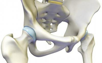 Изображение - Связки тазобедренного сустава анатомия 1515826