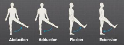 Изображение - Строение мышц тазобедренного сустава 1515827
