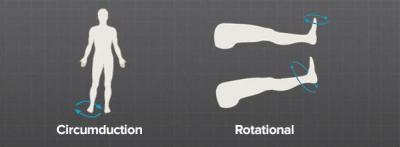 Изображение - Связки тазобедренного сустава анатомия 1515828