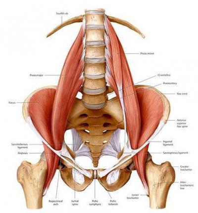 Изображение - Связки тазобедренного сустава анатомия 1515831