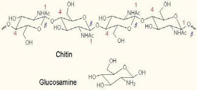 Изображение - Глюкозамин для лечения суставов 1593975