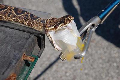 Изображение - Крем на основе змеиного яда для суставов 1594636