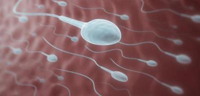 Повышенные жиров в сперме
