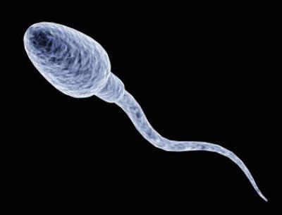 В сперме есть простагладины