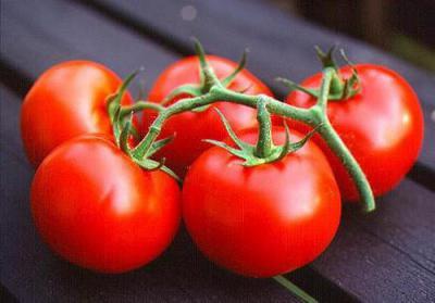снежная сказка томат отзывы фото