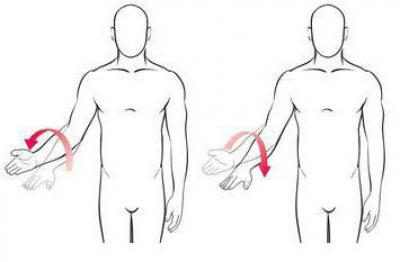 Изображение - Пронация локтевого сустава 1888099
