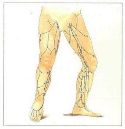 Изображение - Топография голеностопного сустава 1893616