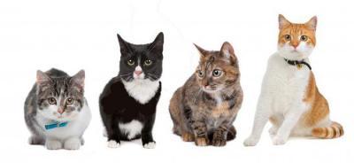 Фитоэлита здоровые почки для кошек и собак, уп. 50 таб. Препараты.