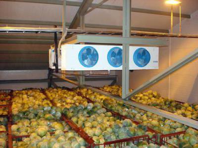 Изображение - Строительство овощехранилищ как бизнес 2031492