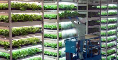 Изображение - Строительство овощехранилищ как бизнес 2031496