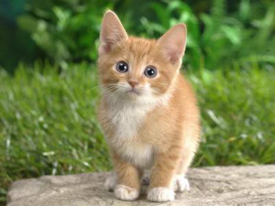 таурин в корме для кошек