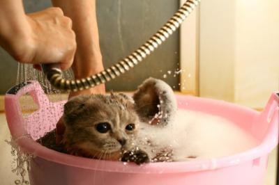 можно ли мыть кошку мылом