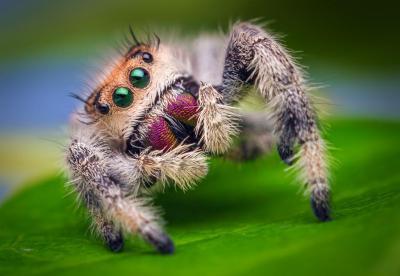 Хелицеры и педипальпы у паукообразных: особенности и модификации