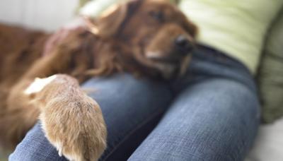 Изображение - Локтевой сустав щенка 3005751