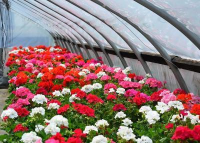 Изображение - Цветы на продажу 3063079
