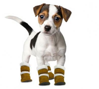 Как сшить обувь для собак своими руками  мастер-класс aa89a26ee77